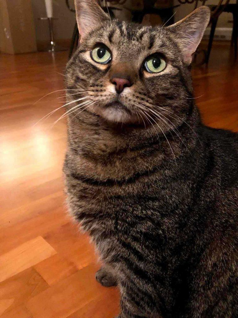 cat-(1)