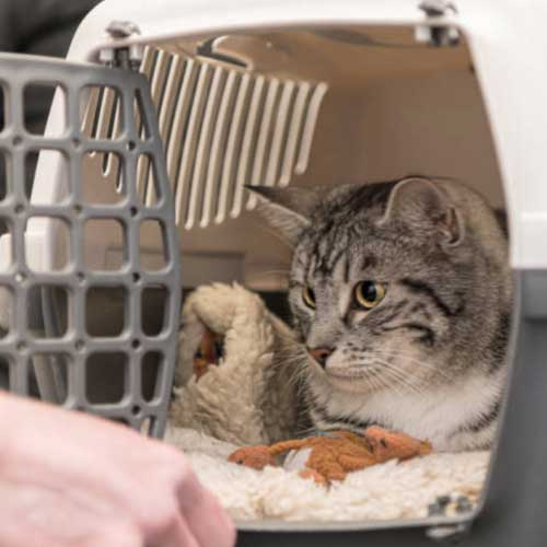 Cat transported in crate.