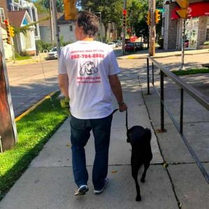 Trained staff walking a dog.