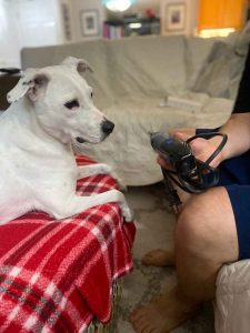 Training a dog to get used to having nails trimmed