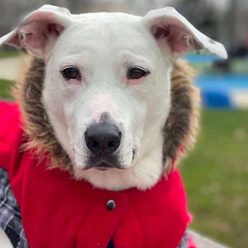 dog in winter, winter gear for dogs