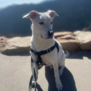 Cues that traveling dogs should know