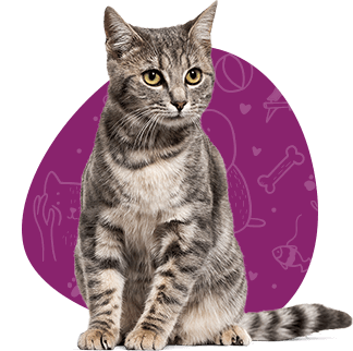 cat-sitting (1)