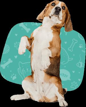dog-training2 (1)